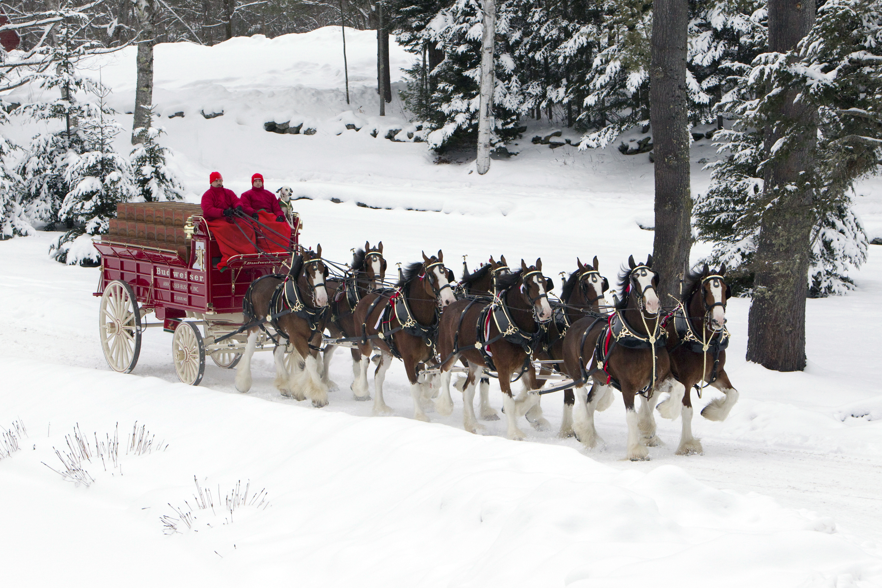 Clydesdales Christmas ...
