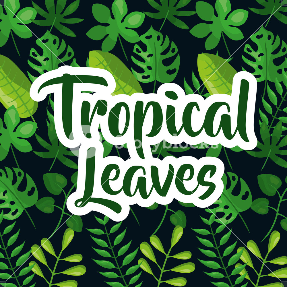 Tropic leaves background with frame for your text texture vector 1000x1000