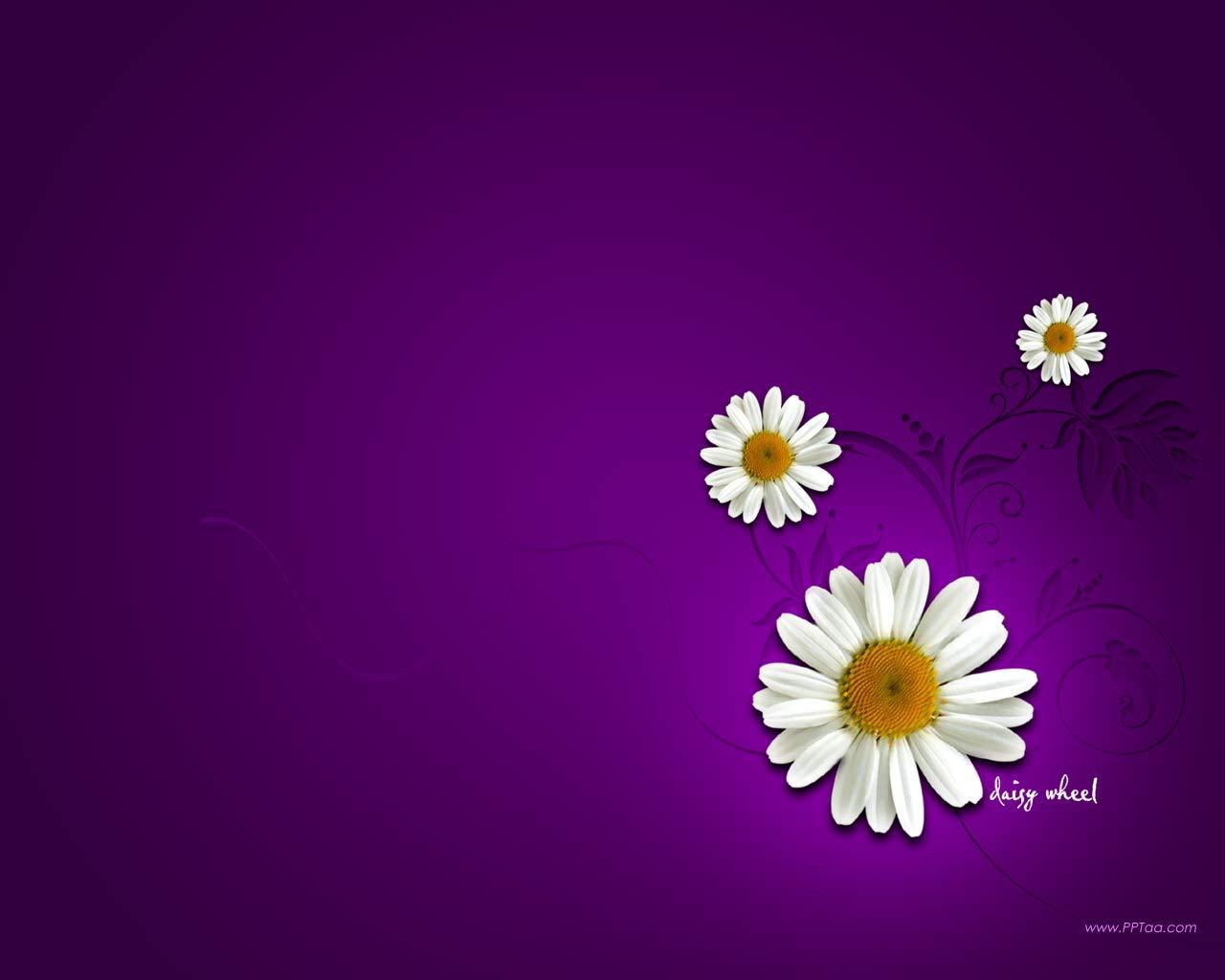 Daisy Flower Wallpaper WallpaperSafari