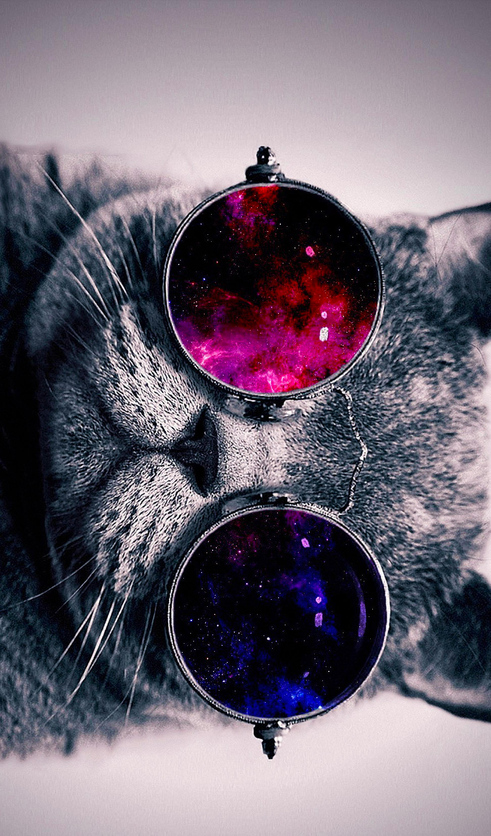 Cat With Glasses Wallpaper Cat with cosmos glasses animal 972x1656