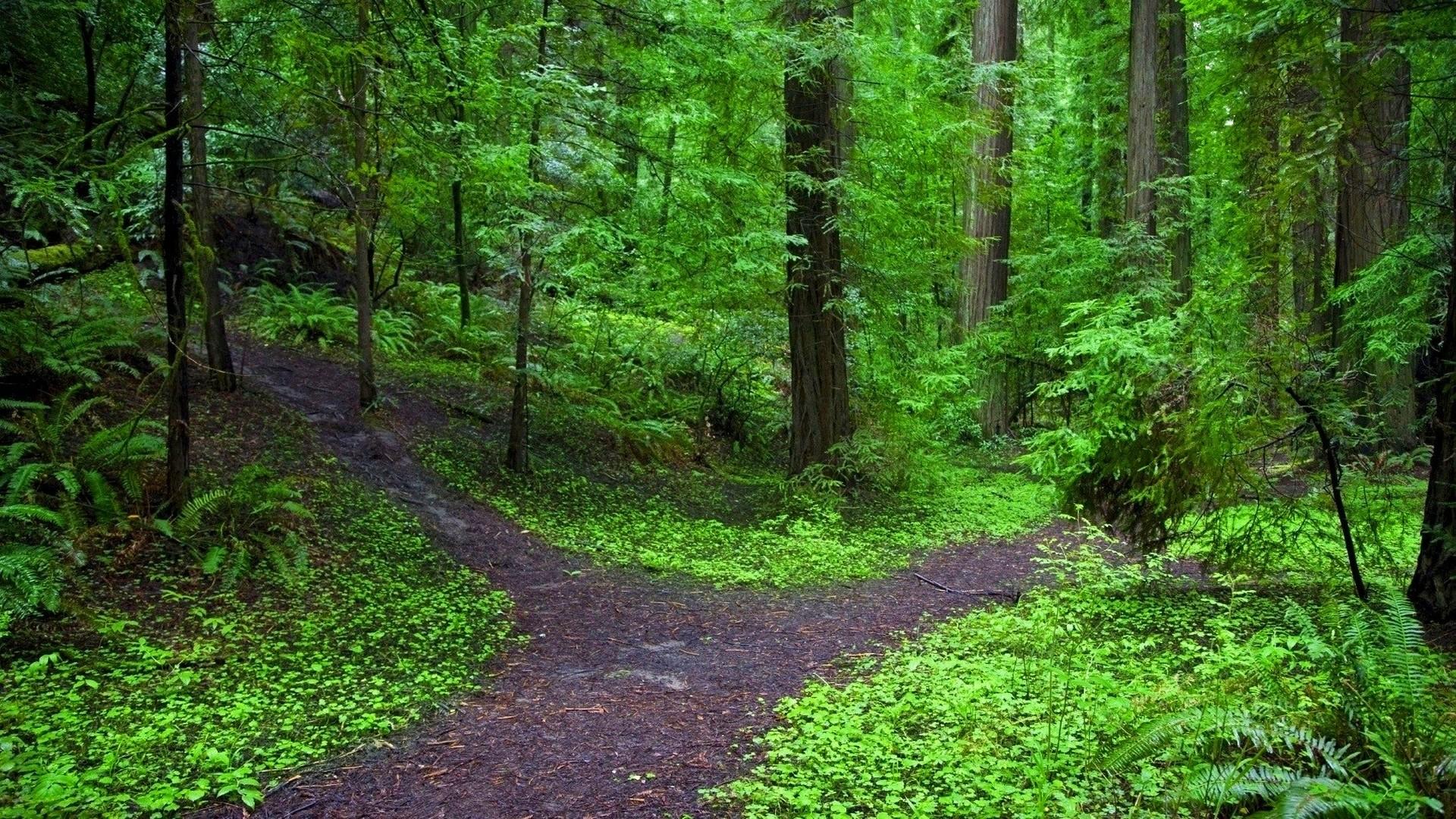 Download Forest Path Wallpaper 1920x1080 Wallpoper 290056 1920x1080
