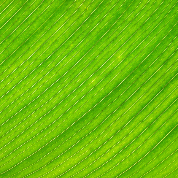 Pin Banana Leaf By Daniel Sommerlad Desktop Wallpaper 600x600