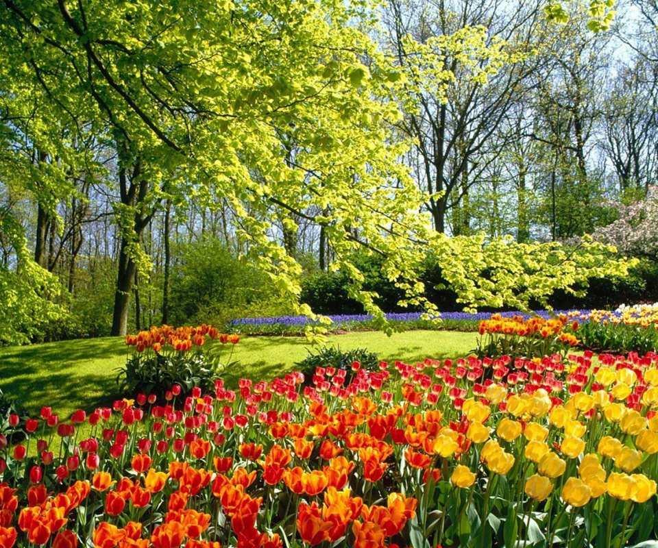 Tulip Wallpaper: Free Spring Desktop Wallpapers Nexus