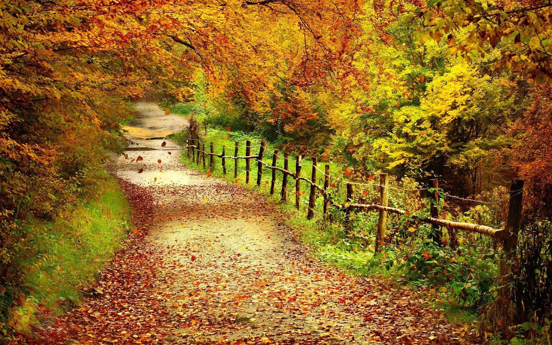 HD Fall Wallpapers make your screen shine brighter 1920x1200
