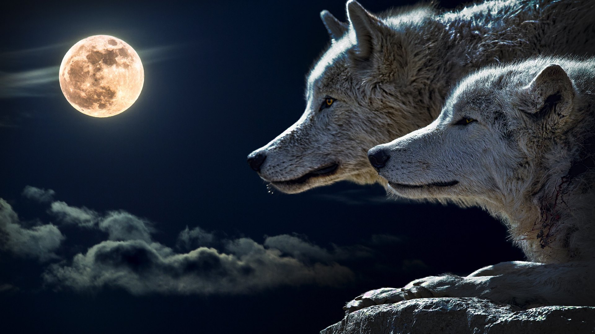 Wolves and Full Moon Wallpaper   Public Domain 1920x1080