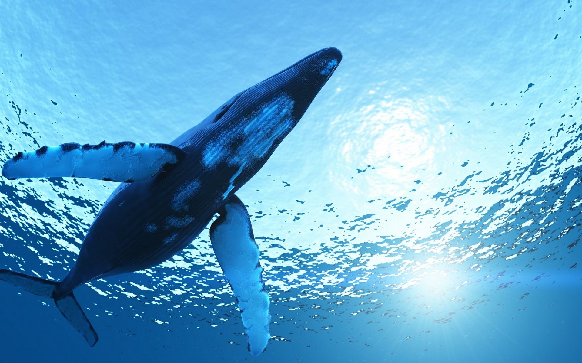 30 Fantastic HD Whale Wallpapers   HDWallSourcecom 1920x1200