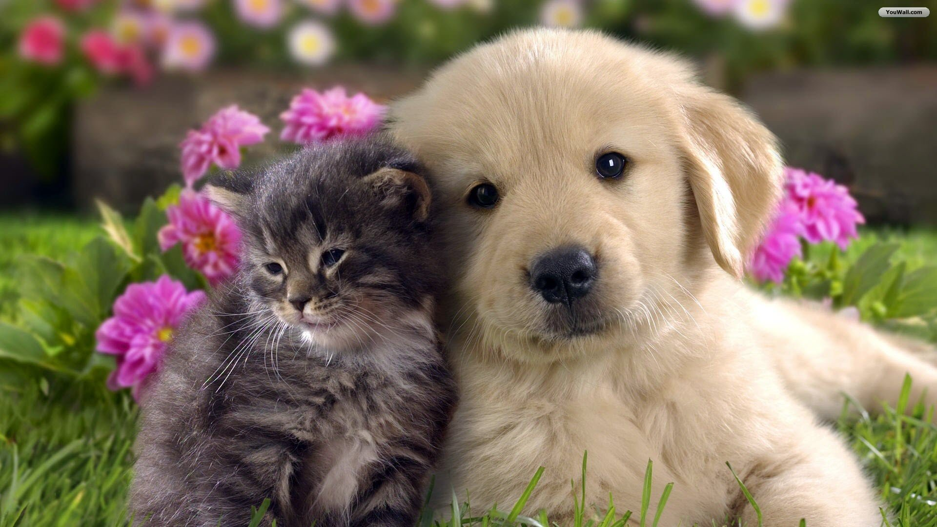 as desktop wallpaper cat and dog wallpaper 1920x1080 294 kb 1920x1080