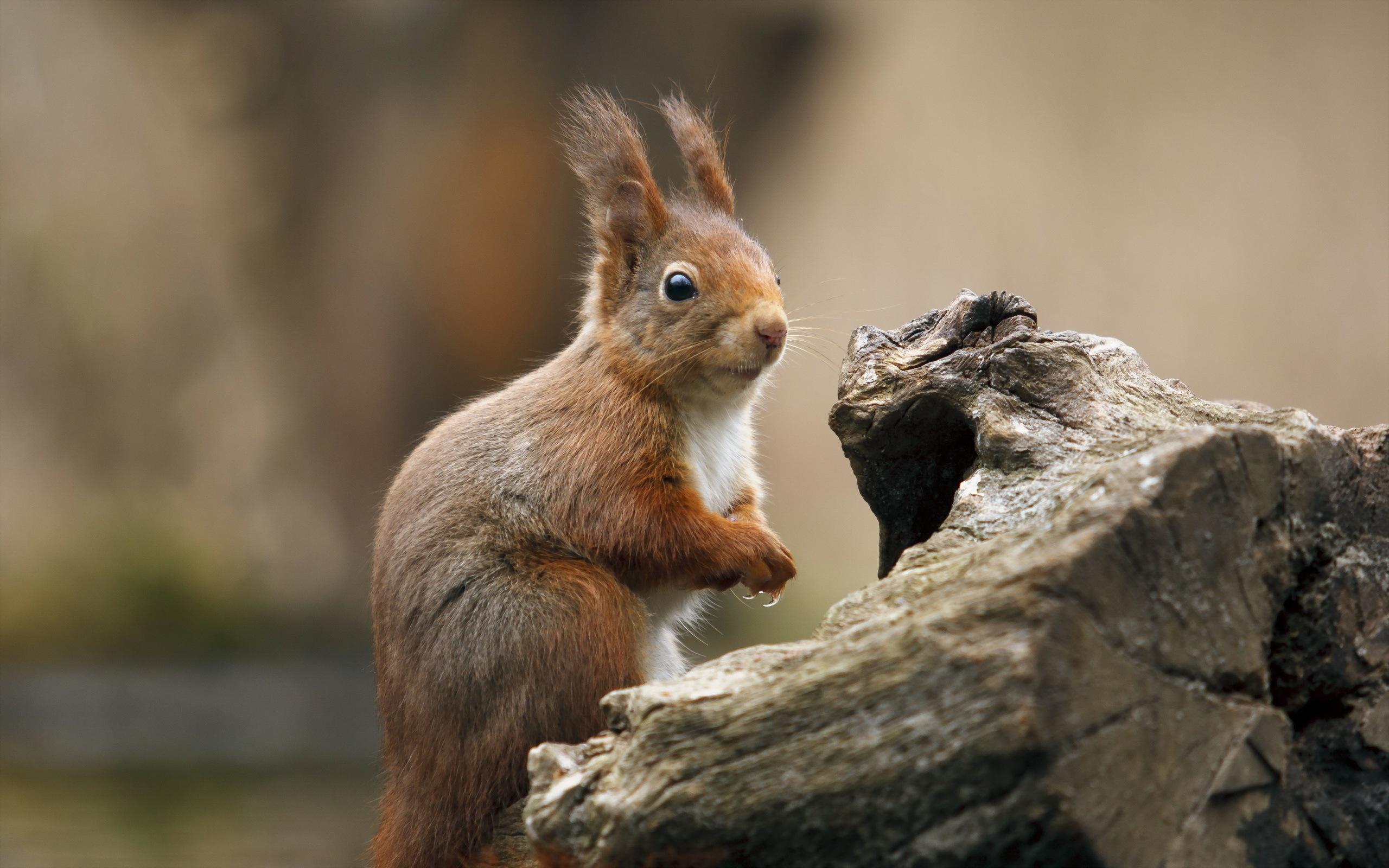39 Funny Squirrel Wallpaper On Wallpapersafari