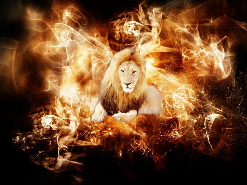 fire flame Fire lion Animals Cats HD Desktop Wallpaper 800x600