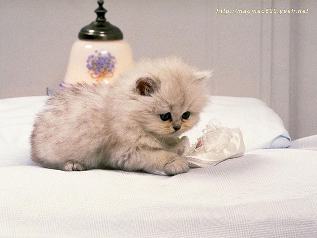 Cute Kitten Wallpaper - Kittens Wallpaper (13938887) - Fanpop
