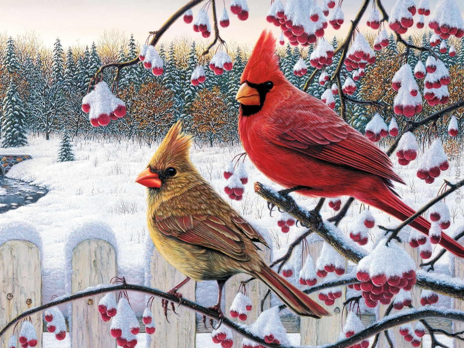 40] Red Bird Winter Wallpaper on WallpaperSafari 1600x1200