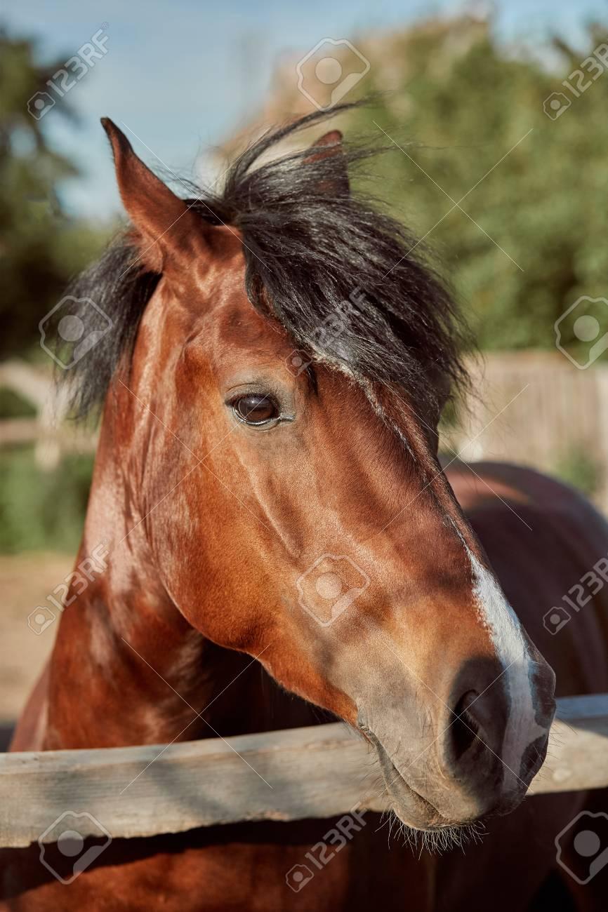 Beautiful Brown Horse Close up Of Muzzle Cute Look Mane 866x1300