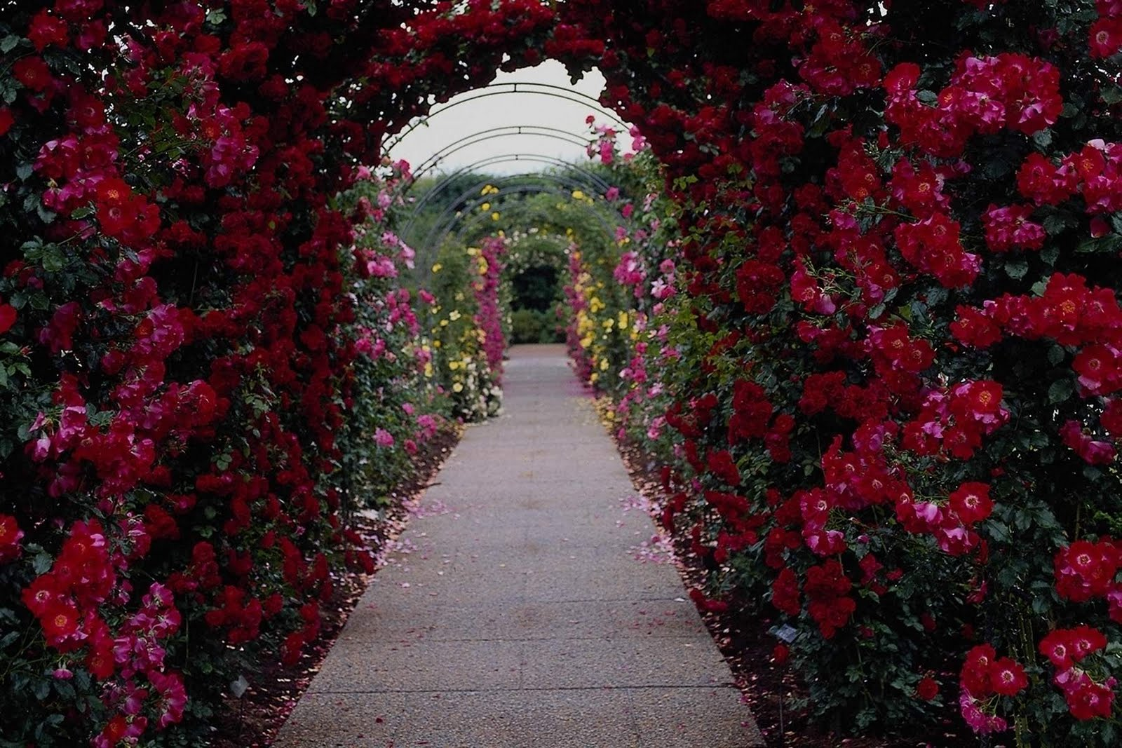 Beautiful flower garden path - Funny Image Collection Beautiful Flower Garden Wallpapers