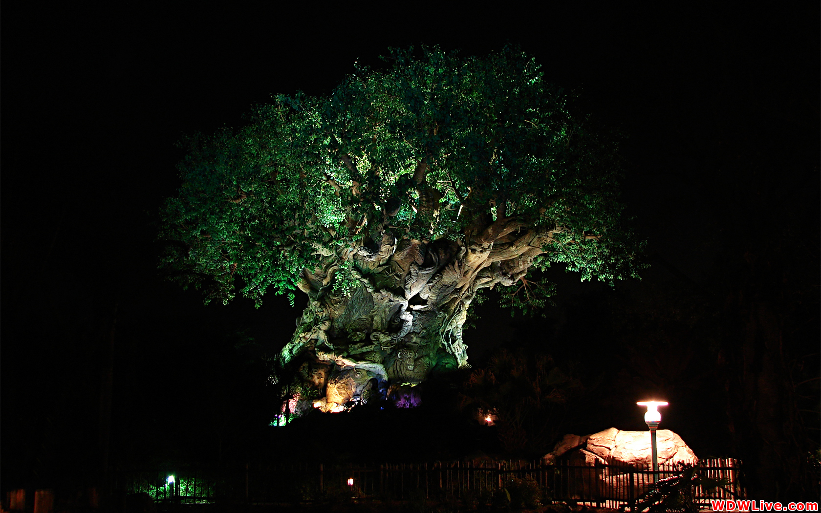 disney s animal kingdom wallpaper-#26