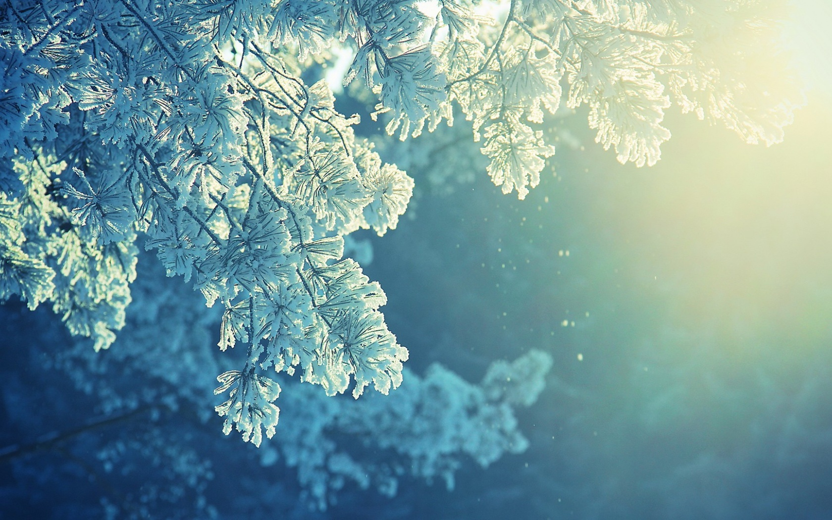 Download Winter Frost Branches Sunshine Wallpaper in 1680x1050 1680x1050