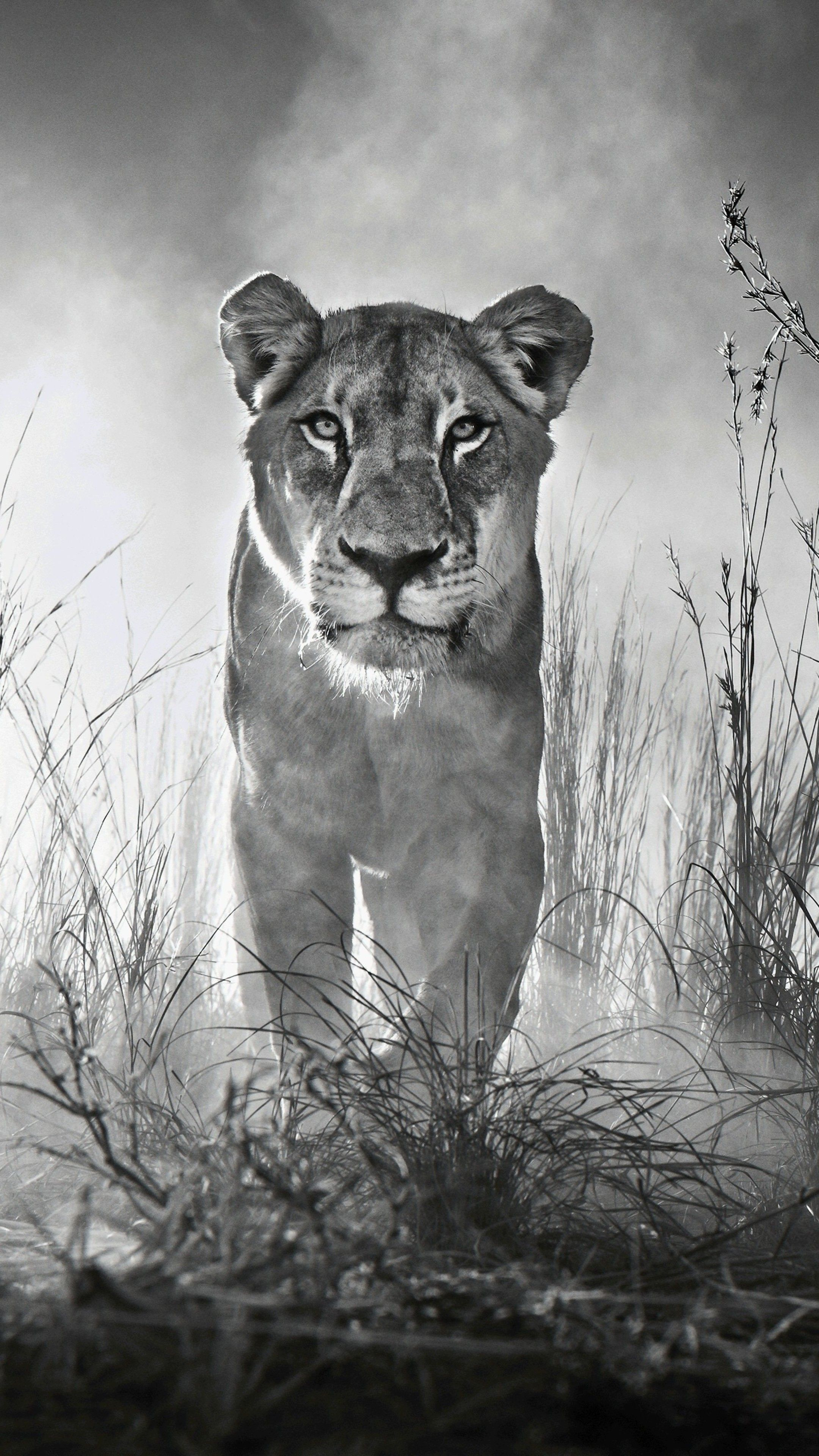 Black And White Animal Wallpapers   Top Black And White 2160x3840