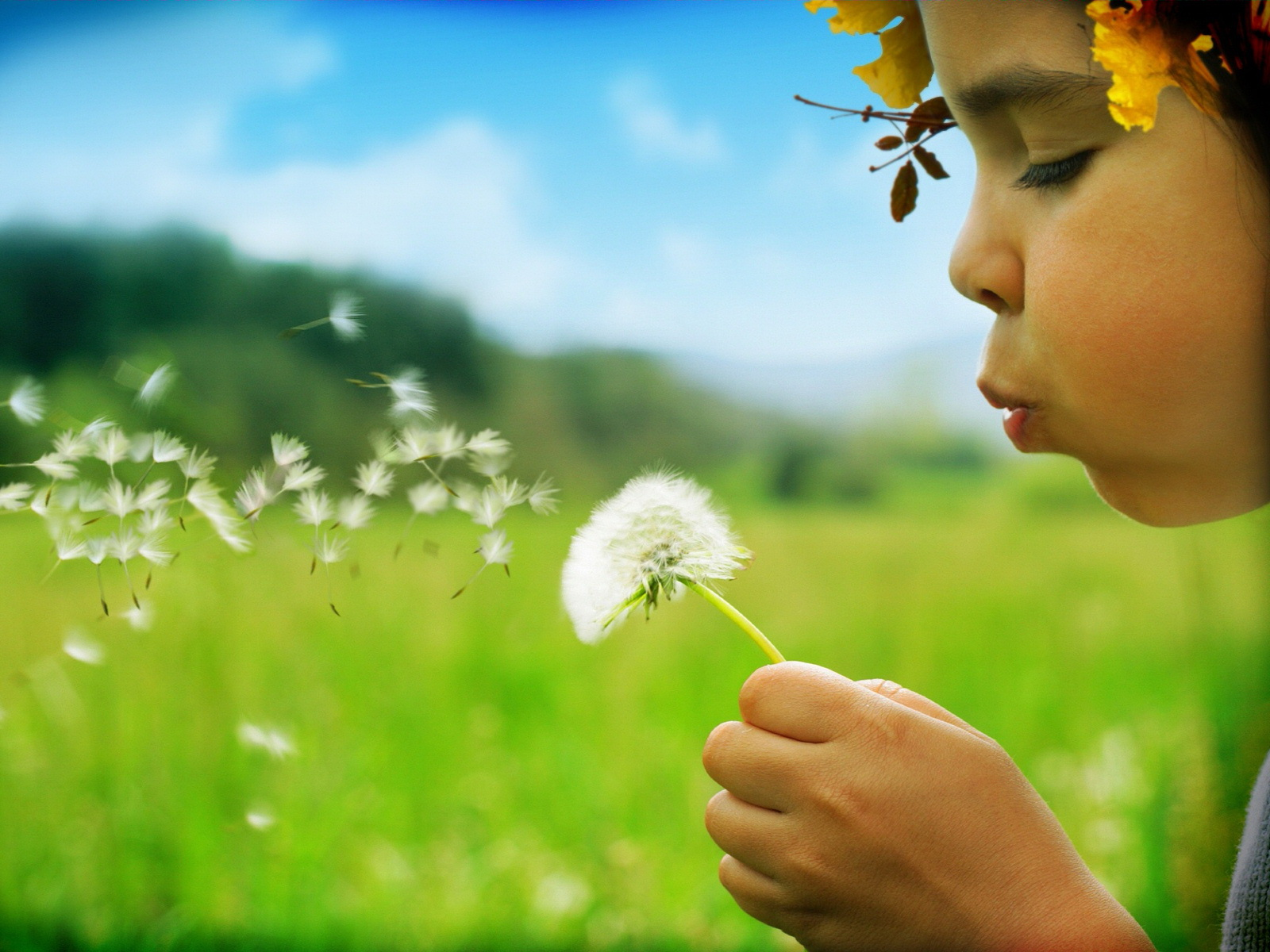 ... blowing dandelion in the meadow - Kids Wallpapers - Hi-Wallpapers.com