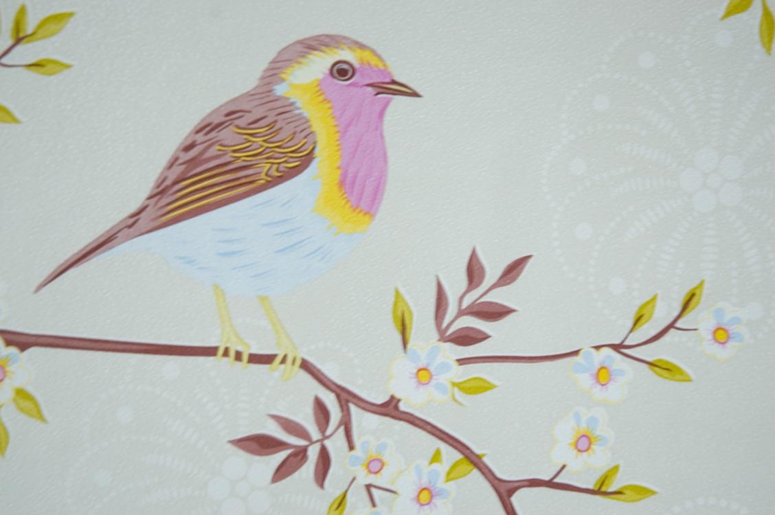 DREAM WALLPAPER Bird Wallpaper for Walls 1128x750