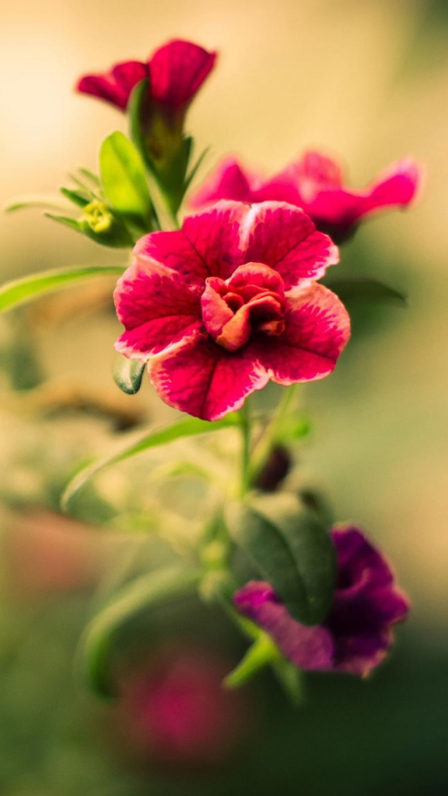 Red Blurry Flower iPhone 5s Wallpaper Download iPhone Wallpapers 640x1136