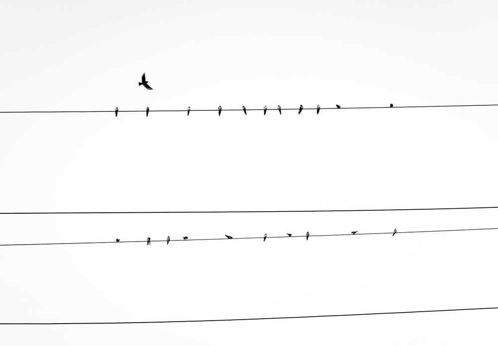 Birds On A Wire Pictures Download Images on Unsplash 1000x696