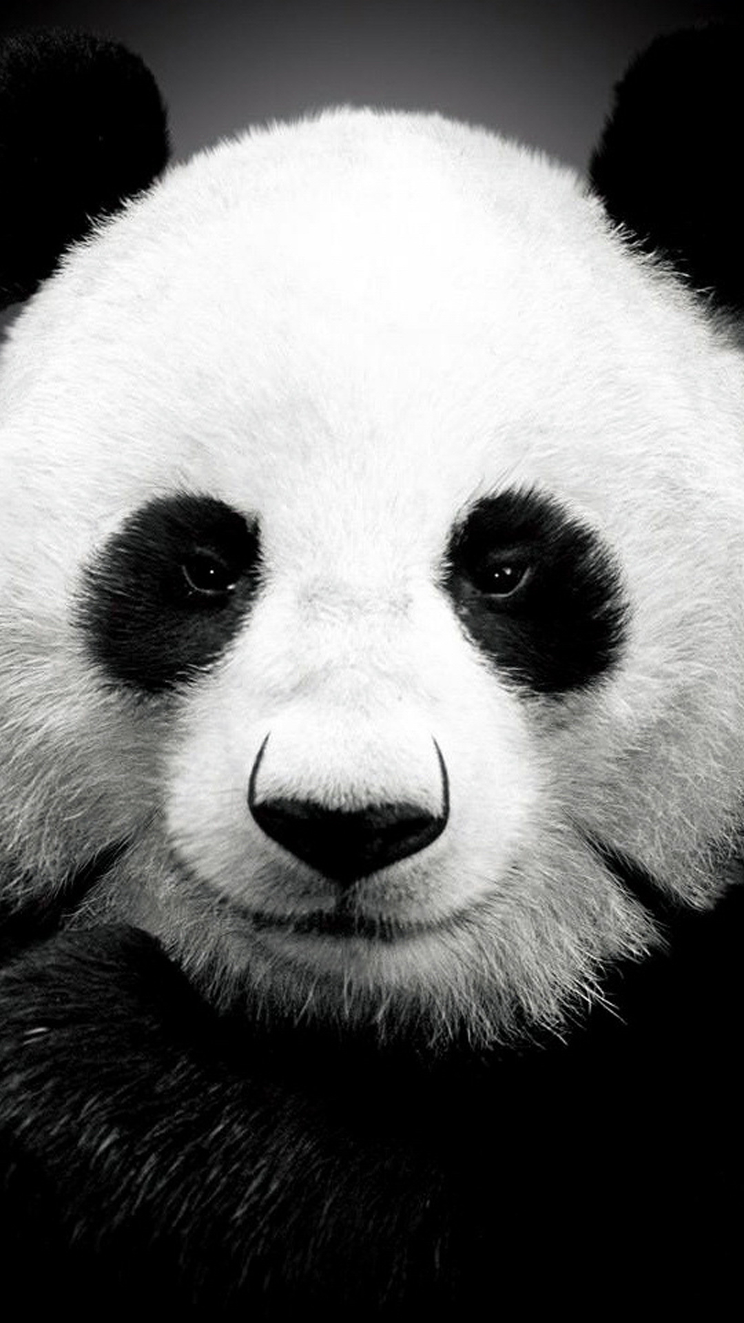 Panda bear   Best htc one wallpapers and easy to 1080x1920