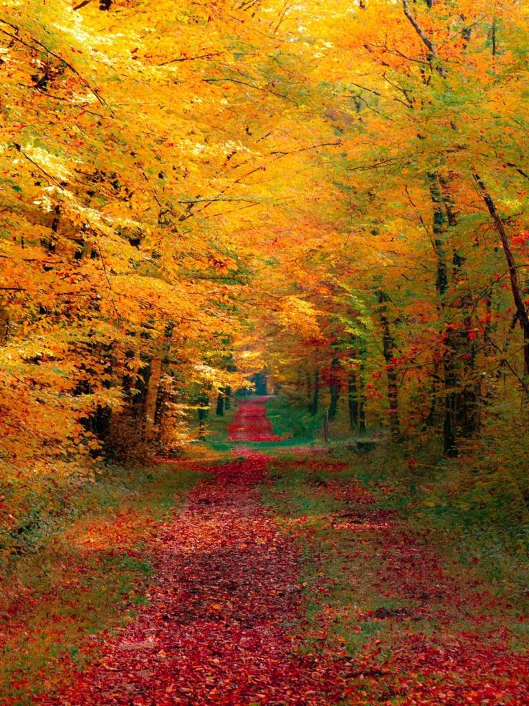 768x1024 Autumn Forest Ipad wallpaper 768x1024