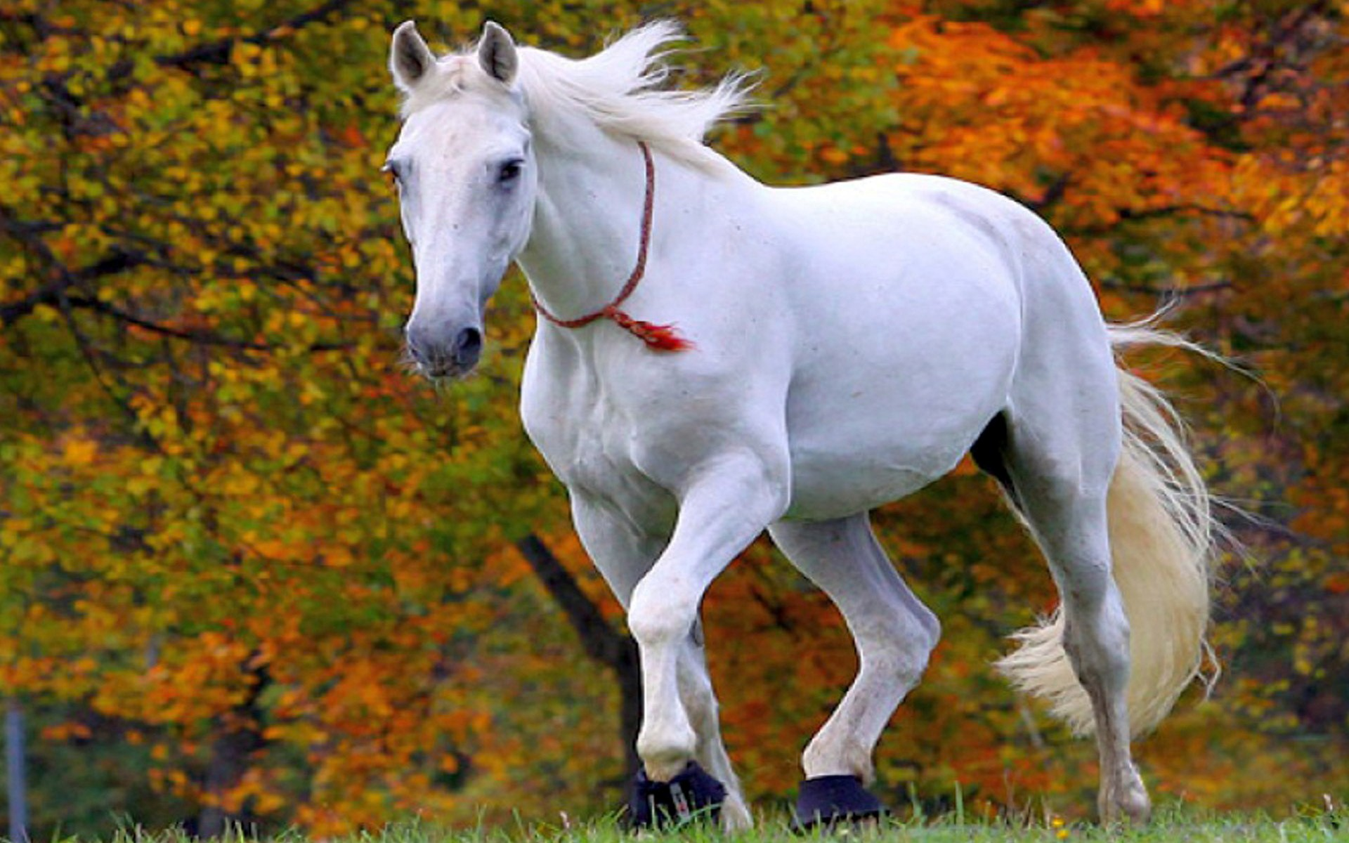 Free Download White Horse Wallpaper Desktop Background As