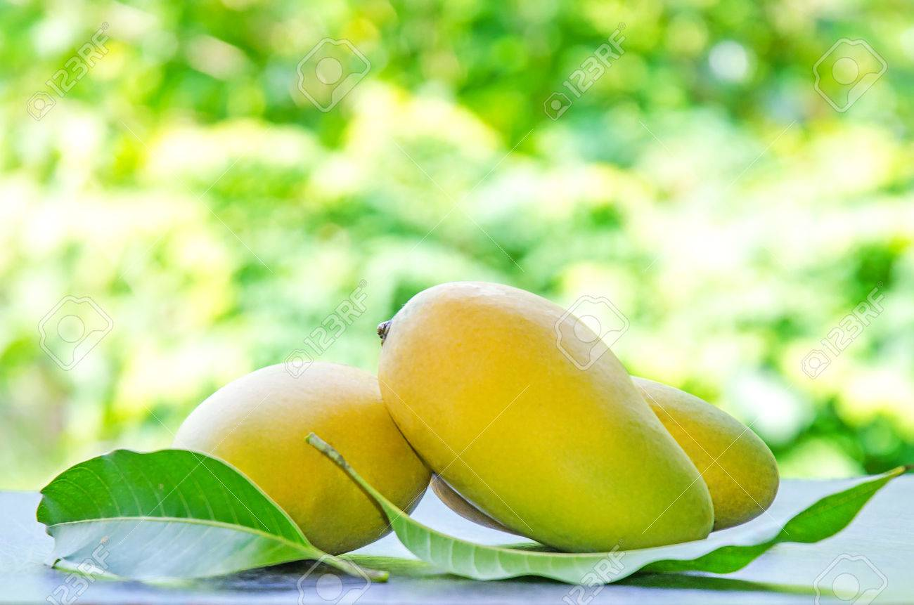 Mango And Mango Leaves For Isolated The Background On White 1300x861