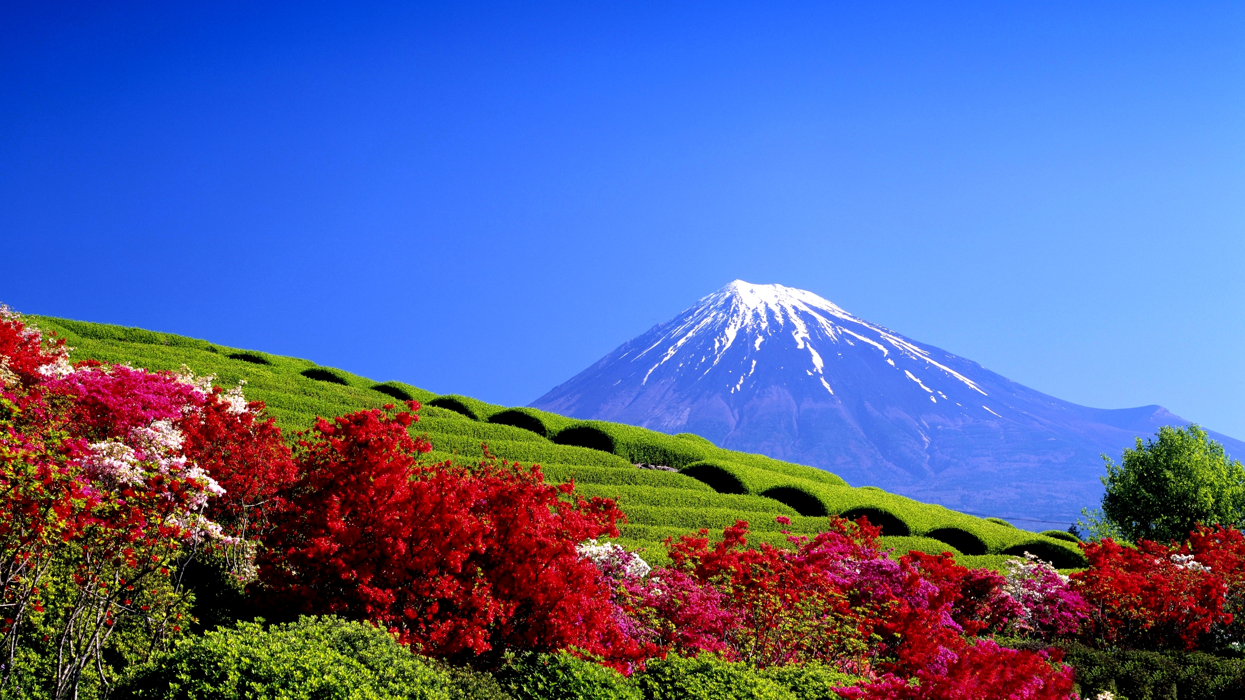 download flowers beautiful springtime agriculture blue sky 2560x1440