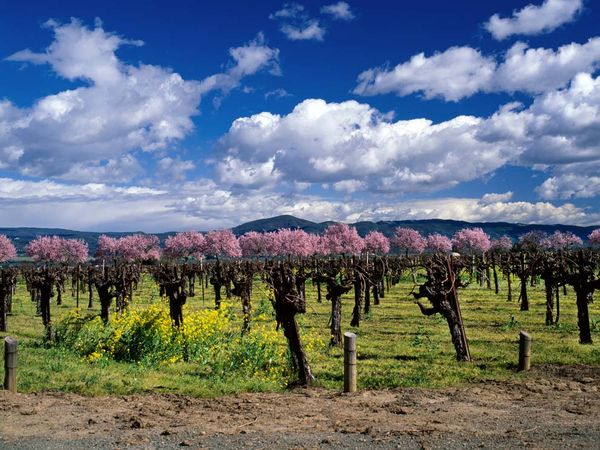 Vineyard Photos    National Geographic 600x450