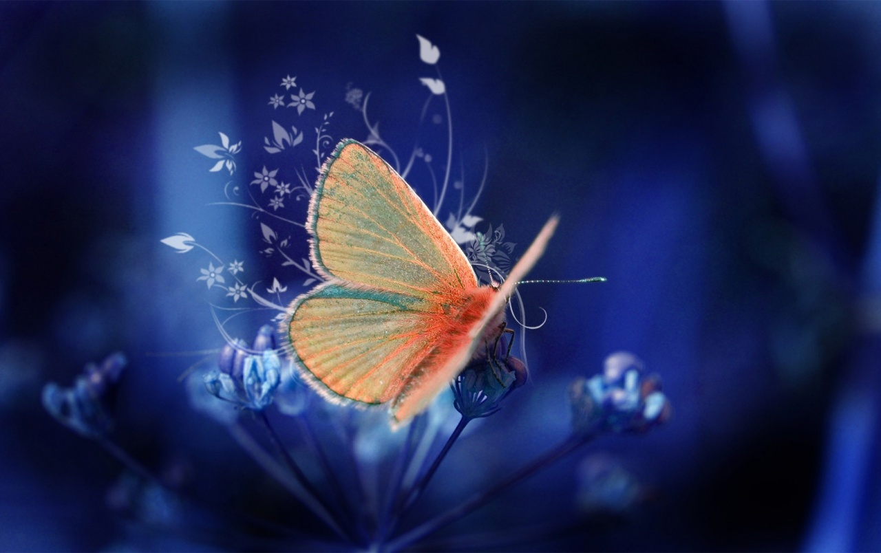 55 Colorful ButterflyHD Images Wallpapers Download 1280x804