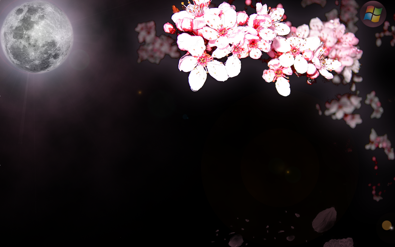 Сакура на черном фоне картинка