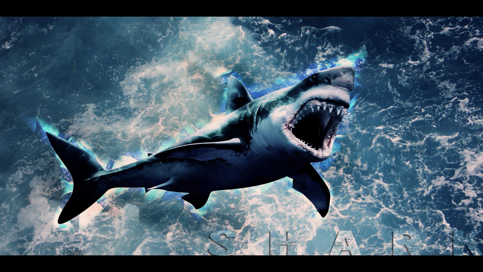 Shark Wallpaper HD by Tooyp 1920x1080