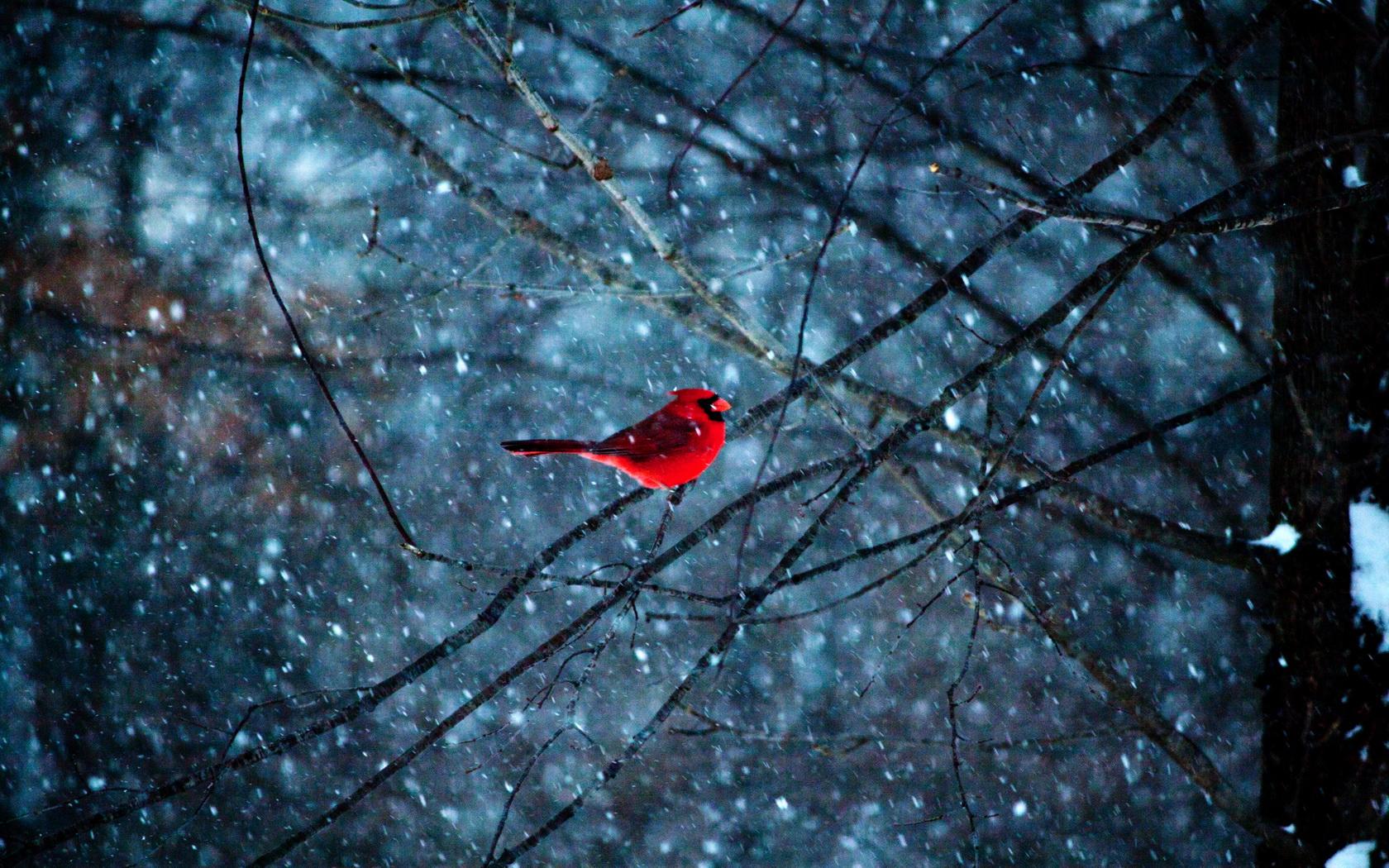 Red Bird in Snowflakes wallpaper by LadyGaga RevelWallpapersnet 1680x1050