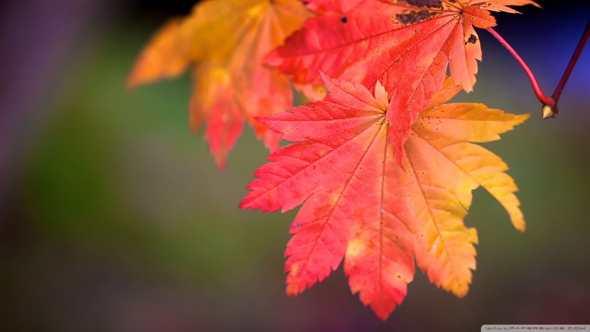 Fall leaves wallpaper   942970 1920x1080