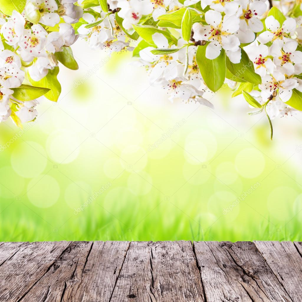 Spring Background Images 102 images in Collection Page 3 1024x1024