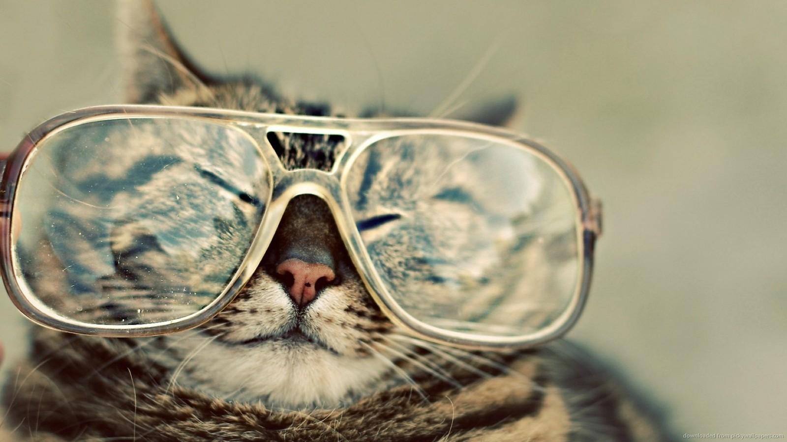 Download 1600x900 Cat In Big Glasses Wallpaper 1600x900