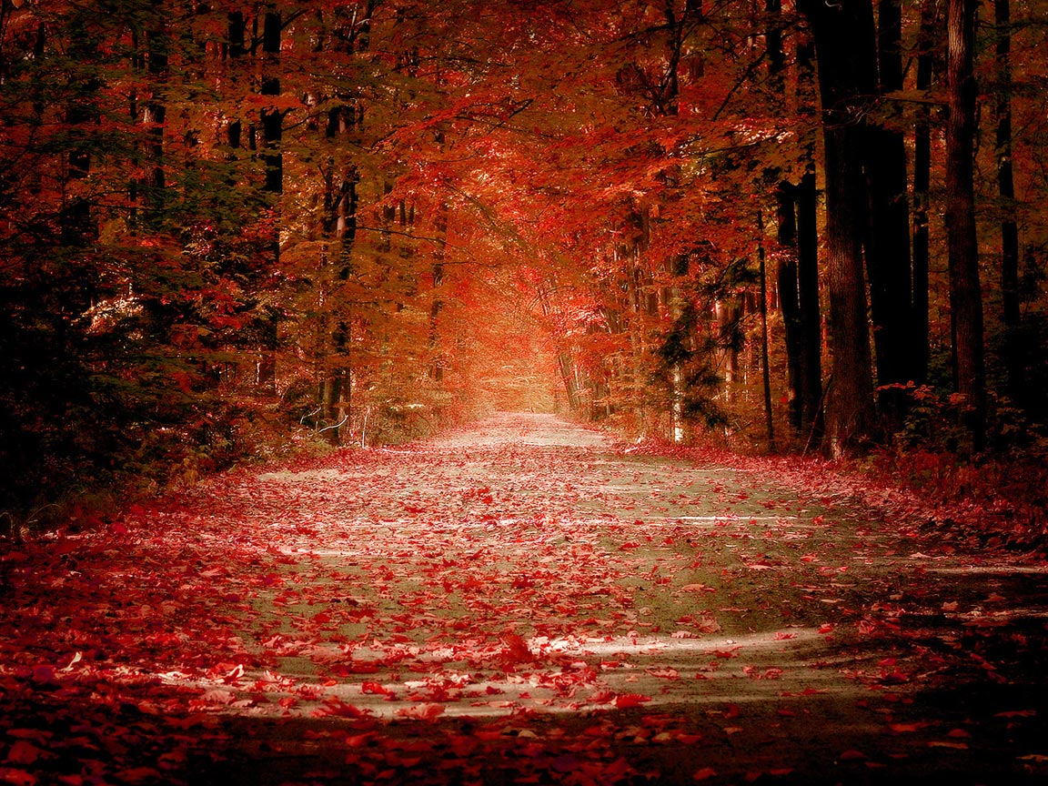 Autumn Road Wallpapers HD Wallpapers 1152x864