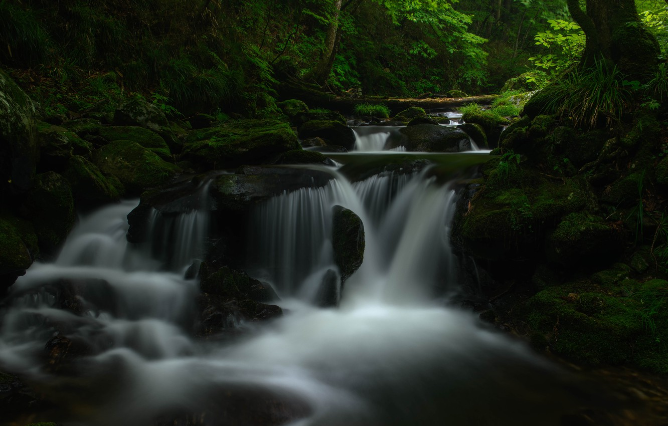 Wallpaper greens forest water landscape nature the dark 1332x850