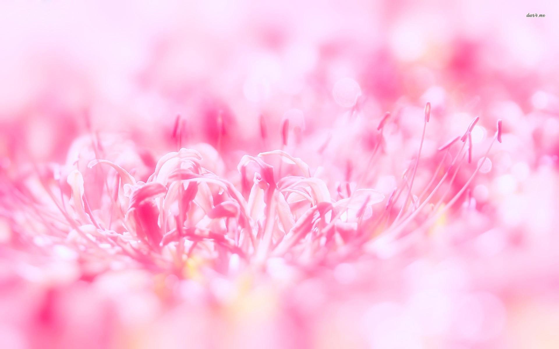 Pics Photos   Pretty Flower Background Pretty Flower 1920x1200