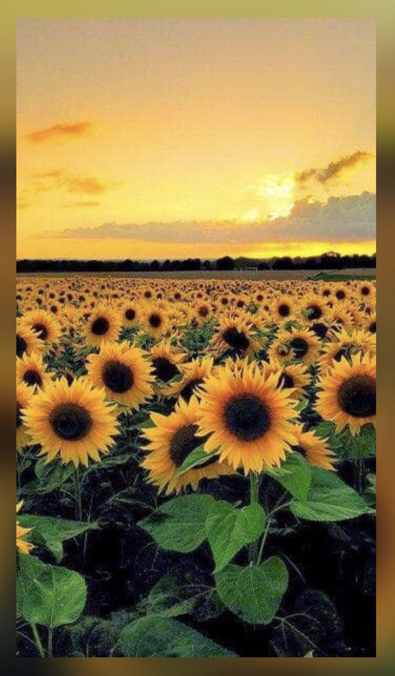 Pin by Kar3n59 on Jehovahs Awesome Creation Sunflower 1375x2354