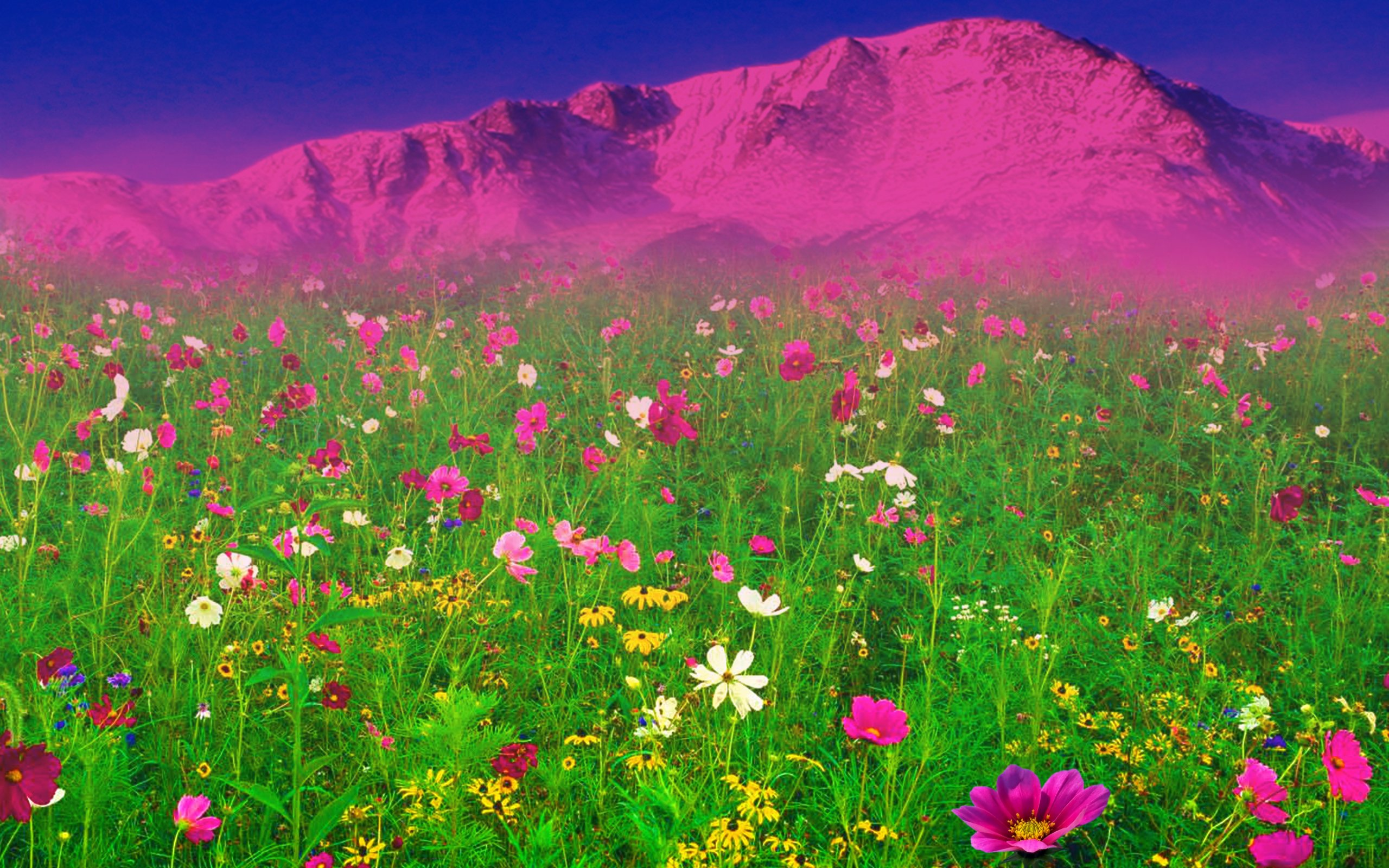 Field Of Spring Flowers Wallpaper Wallpapersafari