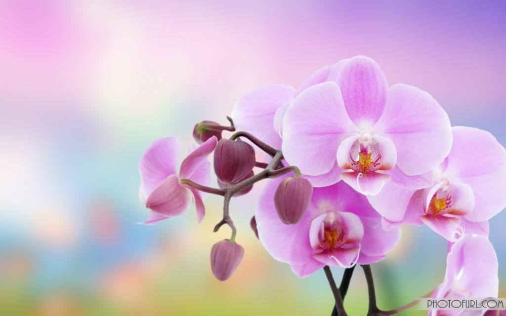 [48+] Animated Flowers Wallpapers on WallpaperSafari