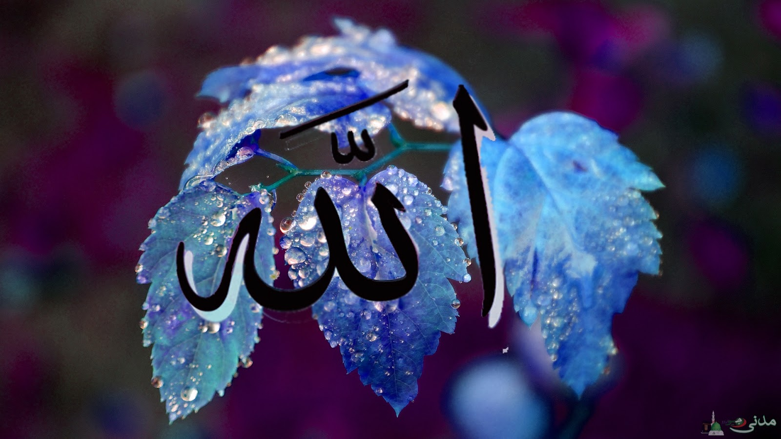 Wallpapers Allah Names The 99 Names of Allah In the Name of Allah 1600x900