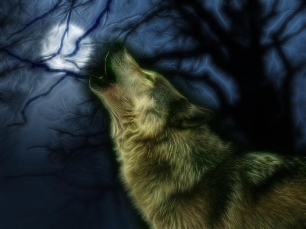 Wolves howling wallpaper wallpapersafari - Wolf howling hd ...