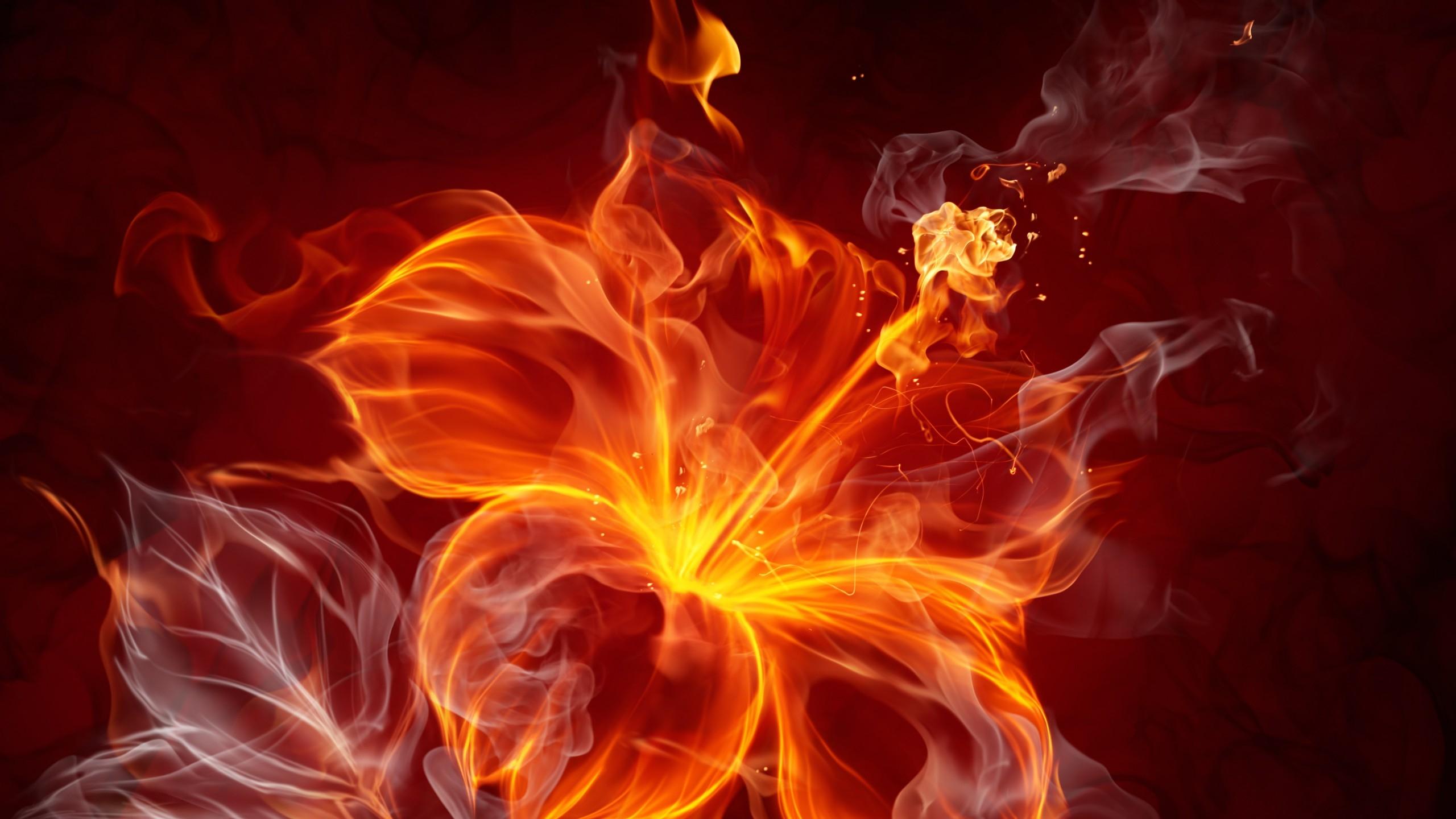 Fire Flower 3D Wallpaper   HQ Wallpapers download 100 high 2560x1440