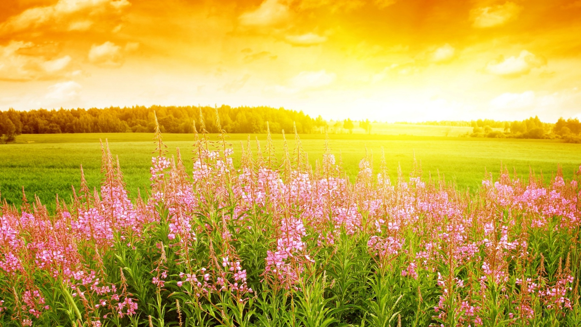 Summer Field Flowers 1920 x 1080 Download Close 1920x1080