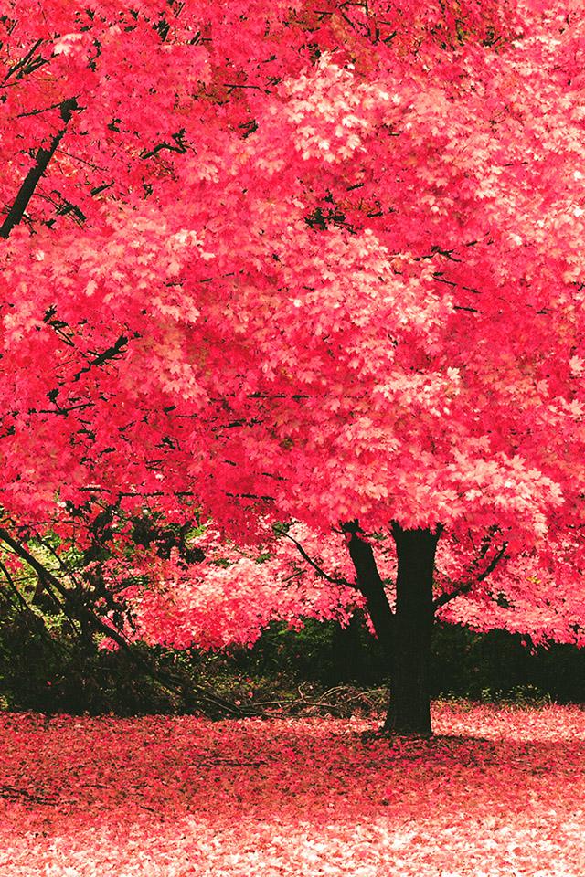 FREEIOS7 autumn fantasy   parallax HD iPhone iPad wallpaper 640x960