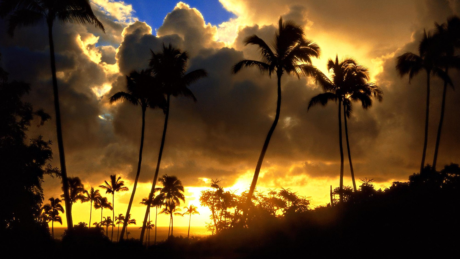 palm trees sunset wallpapers palm trees sunset wallpapers palm trees 1920x1080