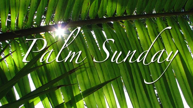 wallpaper 01 palm sunday wallpaper 02 palm sunday wallpaper 03 800x450